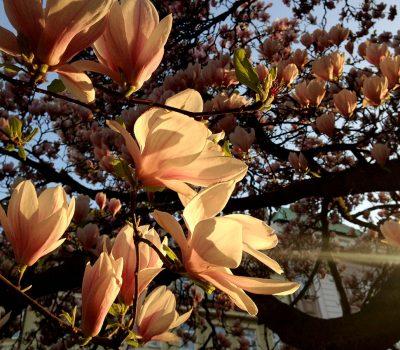Květen v Děčíně
