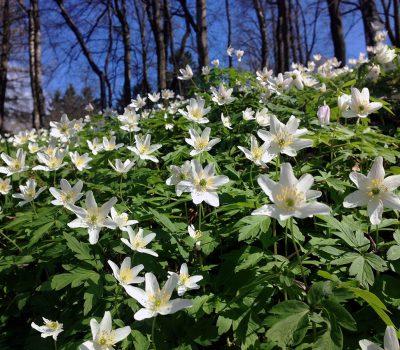 Předjaří a jaro